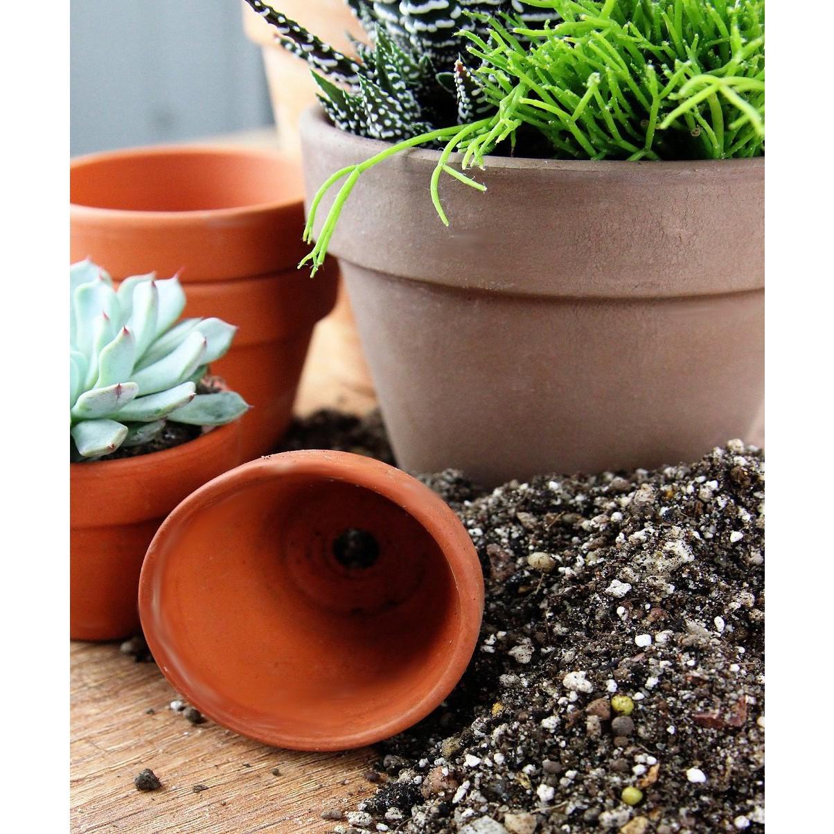 Zemina pro sukulenty a kaktusy 2 litry substrát megamix.shop
